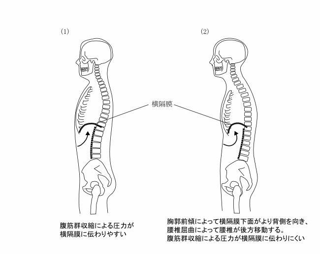図1ー11 腹筋群収縮の横隔膜への圧力伝達