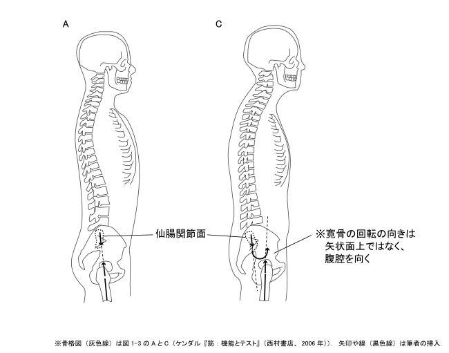 図1−8 骨盤の寛骨で生じる偶力