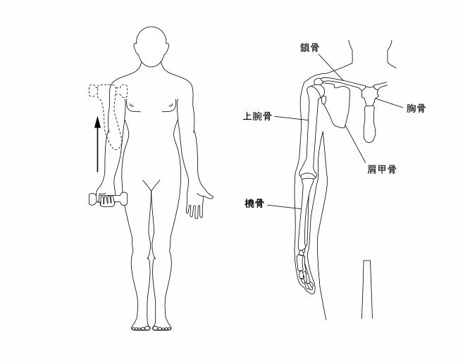 図2ー1 腕の動作 上肢の骨の構造