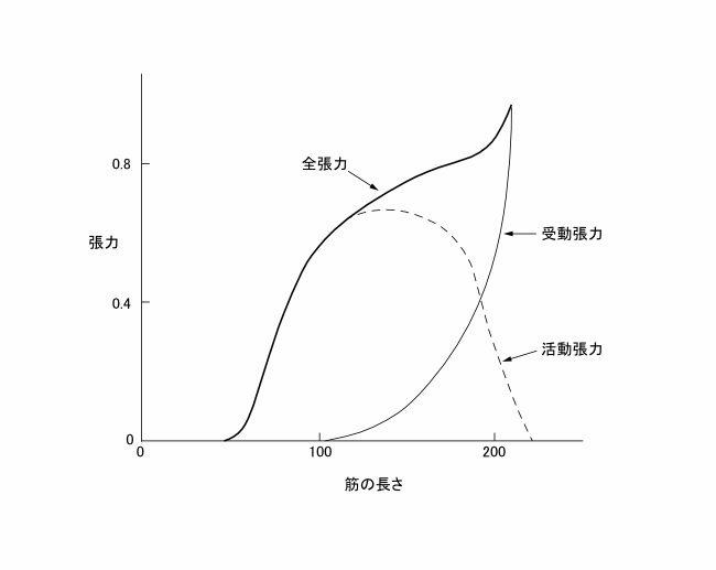 図2ー3 筋の長さと張力の関係