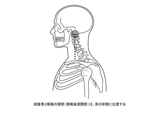 図6−3 頭蓋骨と頚椎の関節位置