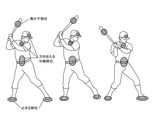 図7ー7 バットスイングの動作:力の流れで意識する箇所